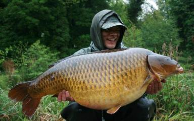 Carp for sale coarse fish stocking trout pellett for for Baby carp for sale